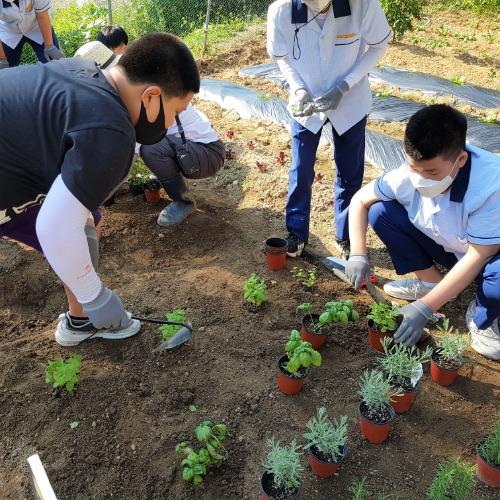 1.학교텃밭에서 아이들의 꿈과 행복을 가꾸다01(지난해 구미중학교 텃밭활동).jpg